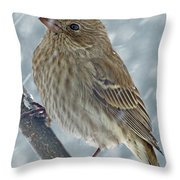 Female House Finch In Snow 1 Throw Pillow