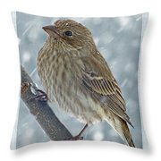 Female House Finch In Snow Throw Pillow