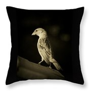 Female House Finch Throw Pillow