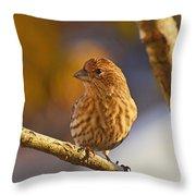 Female Housefinch Throw Pillow