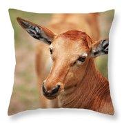 Female Impala Throw Pillow