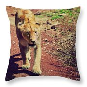 Female Lion Walking. Ngorongoro In Tanzania Throw Pillow