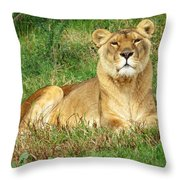 Female Lioness Lying On The Grass In The Afternoon Sun Throw Pillow