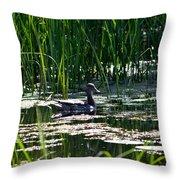 Female Mallard Duck Swimming Throw Pillow