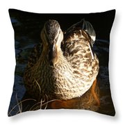 Female Mallard In Pond Throw Pillow