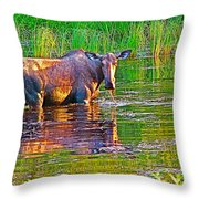 Female Moose Near Airport In Chicken-alaska   Throw Pillow