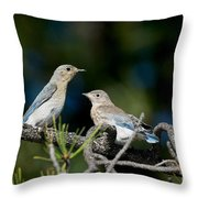 Female Mountain Bluebird With Fledgling Throw Pillow