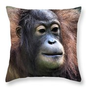 Female Orangutan Borneo Throw Pillow