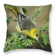 Female Orchard Oriole Throw Pillow