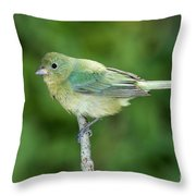 Female Painted Bunting Passerina Ciris Throw Pillow