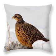 Female Pheasant Throw Pillow