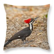 Female Pileated Woodpecker Throw Pillow