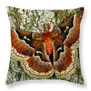 Female Promethea Moth Throw Pillow