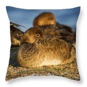 Female Readhead Duck Throw Pillow