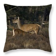 Female Red Deer Suckles Its Young Throw Pillow