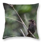 Female Red-wing Throw Pillow