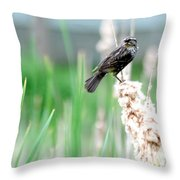 Female Red Winged Black Bird Throw Pillow