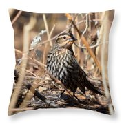 Female Red-winged Blackbird Throw Pillow