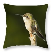 Female Ruby Throated Hummingbird Throw Pillow