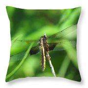 Female Widow Skimmer Throw Pillow