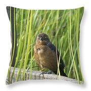 Fence Grackle Throw Pillow