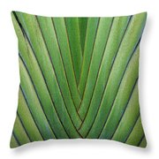 Fern - Colored Photo 1 Throw Pillow
