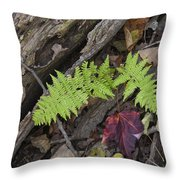 Fern And Maple Leaves Maine Img 6182 Throw Pillow