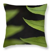 Fern Cyrtomium Fortunei Throw Pillow
