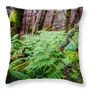 Fern In Forest Throw Pillow