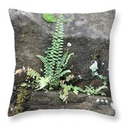 Fern On The Rocks Throw Pillow