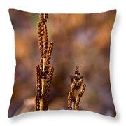 Fern Spore Stalk In Morning 2 Throw Pillow