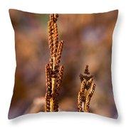 Fern Spore Stalk In Morning Sun Throw Pillow
