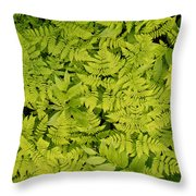 1m2436-ferns At The Base Of Mt. Robson  Throw Pillow