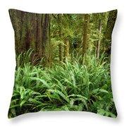 1a2912-ferns In Rain Forest Canada  Throw Pillow
