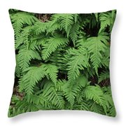 D3b6333-ferns In Sonoma 2  Throw Pillow