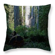Ferns Of The Redwood Forest Throw Pillow