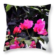 Fernwood Botanical Garden Bougainvillea Niles Michigan Usa Throw Pillow