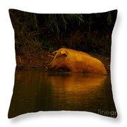 Ferrell Hog At Sunrise Throw Pillow