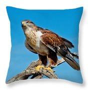 Ferruginous Hawk About To Take Throw Pillow