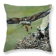 Ferruginous Hawk Bringing Food To Young Throw Pillow