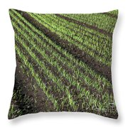 Fertile Farmland Throw Pillow