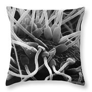 Fertilization In Rat Sem Throw Pillow
