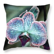 Festive Orchid Throw Pillow