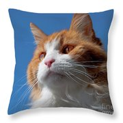 Festus... Throw Pillow