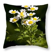 Feverfew Throw Pillow
