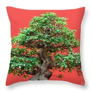 Ficus Bonsai Throw Pillow