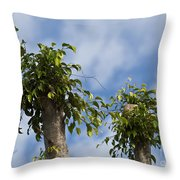 Ficus Leaves Against The Sky Throw Pillow