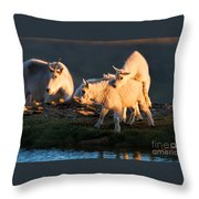 Fiddle Faddle Throw Pillow