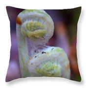 Fiddlehead Fern Throw Pillow