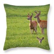 Field Deer Throw Pillow